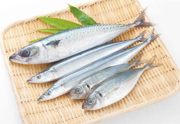毎日摂りたい青魚成分、ちゃんと...